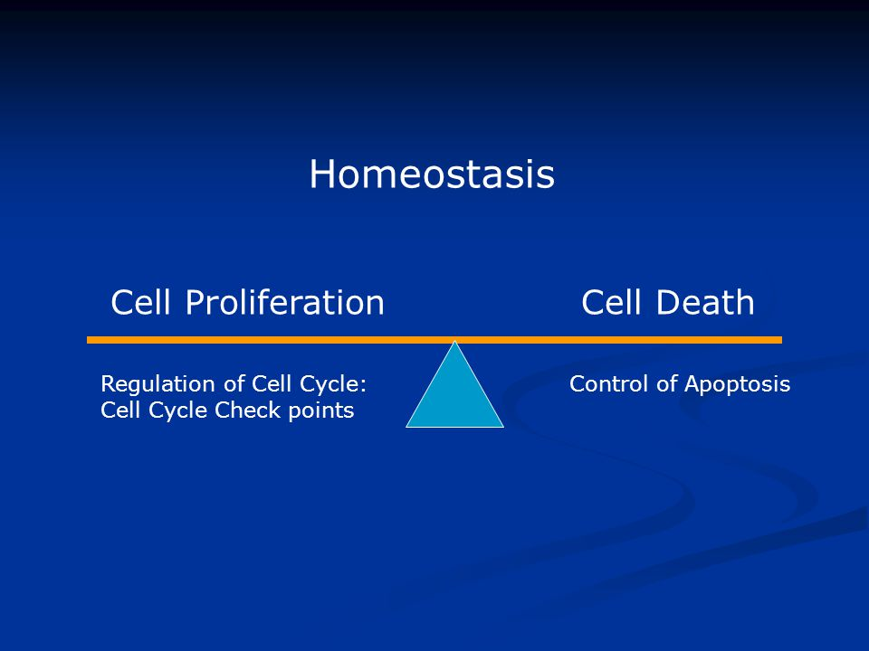 Homeostasis Cell Proliferation Cell Death Regulation of Cell Cycle: