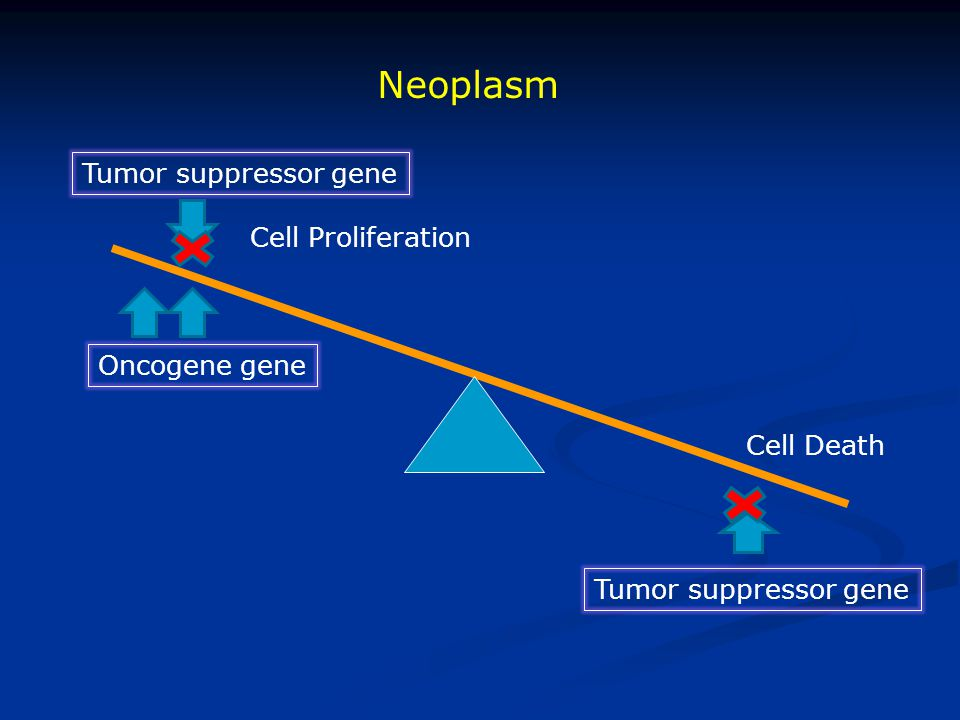 Neoplasm Tumor suppressor gene Cell Proliferation Oncogene gene