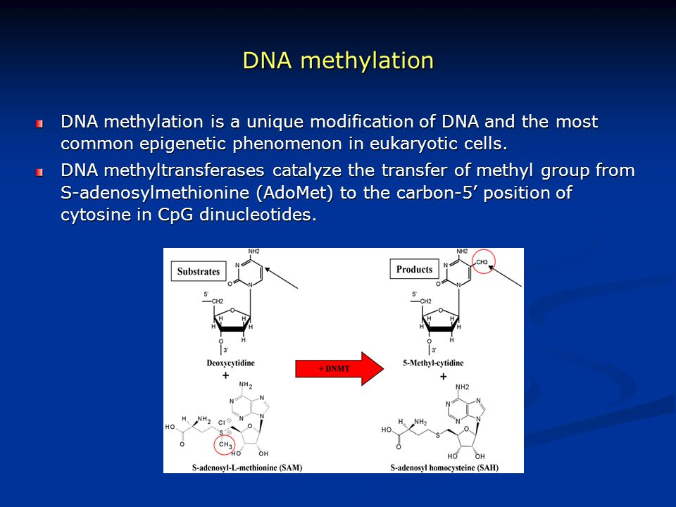 DNA methylation DNA methylation is a unique modification of DNA and the most common epigenetic phenomenon in eukaryotic cells.