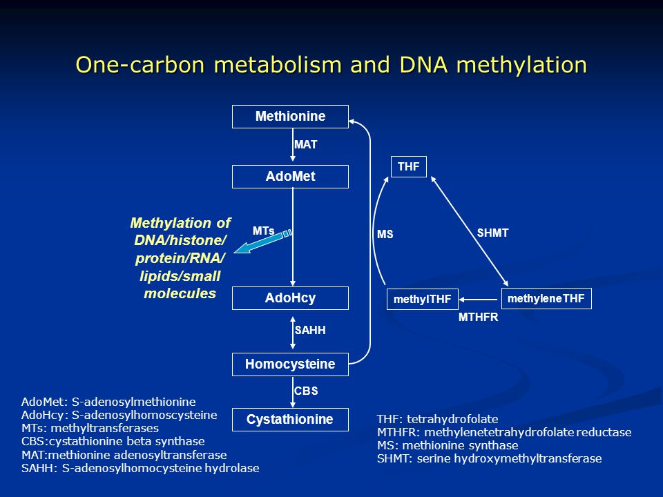 One-carbon metabolism and DNA methylation