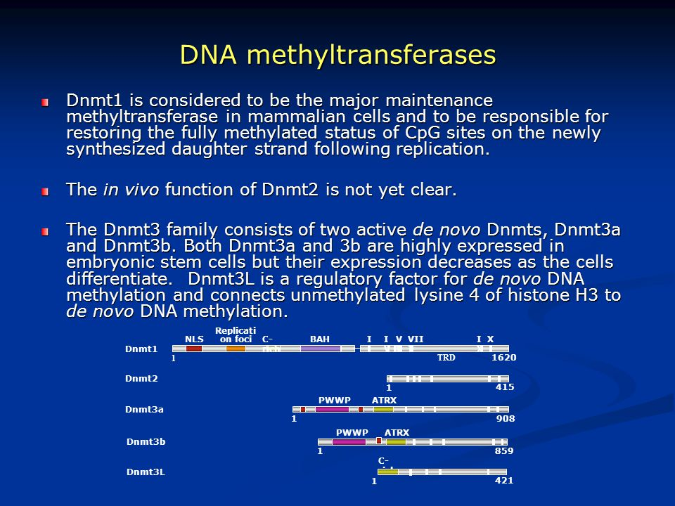 DNA methyltransferases
