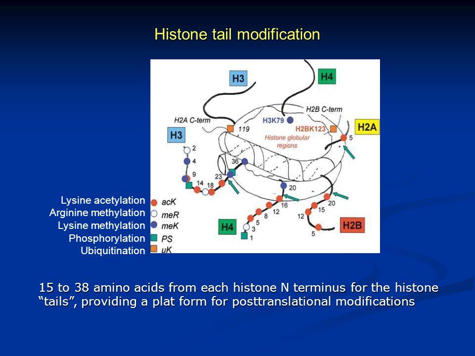 Histone tail modification
