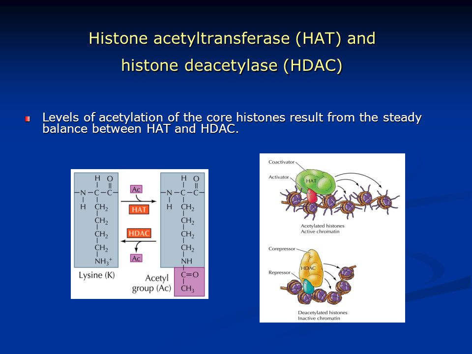 Histone acetyltransferase (HAT) and histone deacetylase (HDAC)