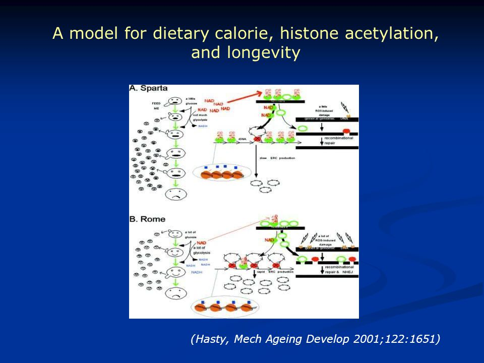 A model for dietary calorie, histone acetylation, and longevity