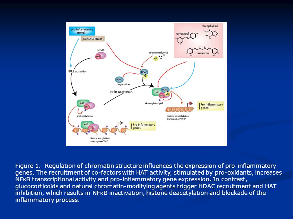 Figure 1. Regulation of chromatin structure influences the expression of pro-inflammatory genes.