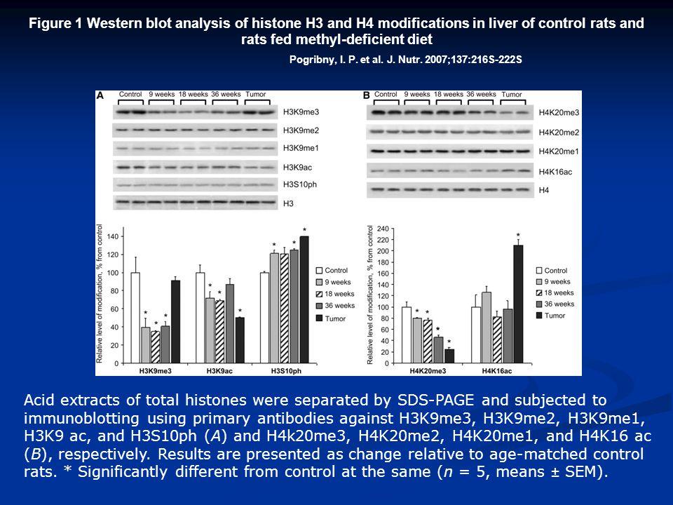 Pogribny, I. P. et al. J. Nutr. 2007;137:216S-222S