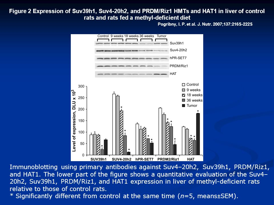 Figure 2 Expression of Suv39h1, Suv4-20h2, and PRDM/Riz1 HMTs and HAT1 in liver of control rats and rats fed a methyl-deficient diet
