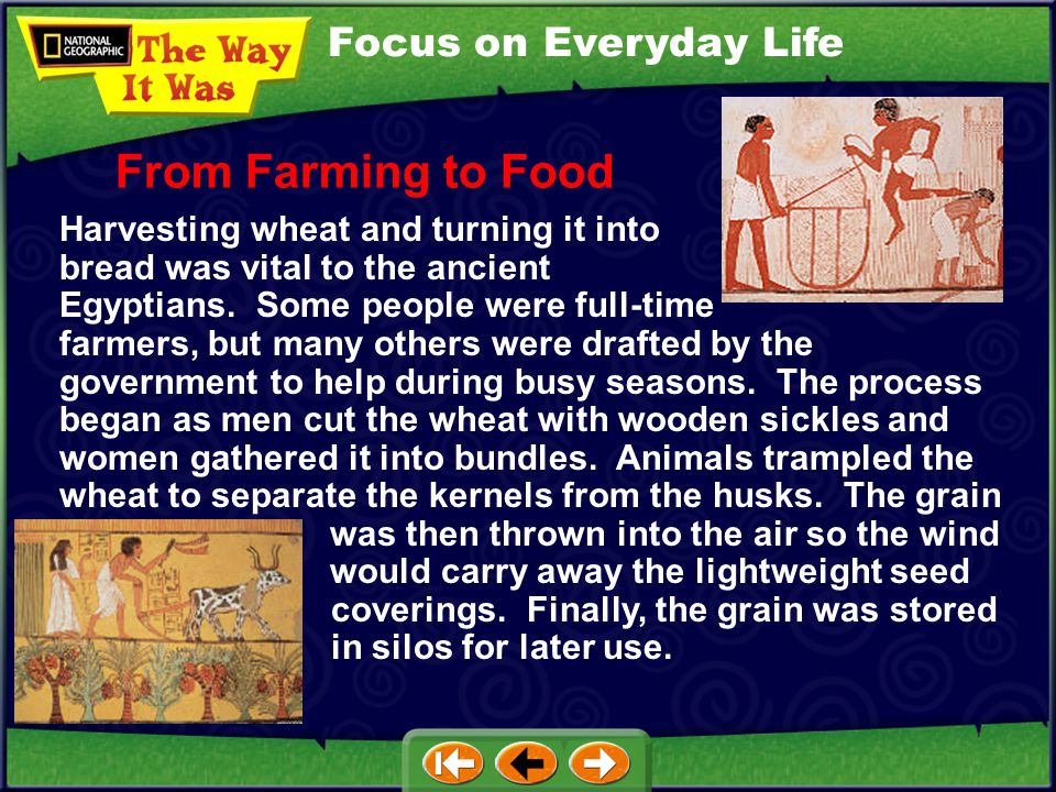 From Farming to Food Focus on Everyday Life