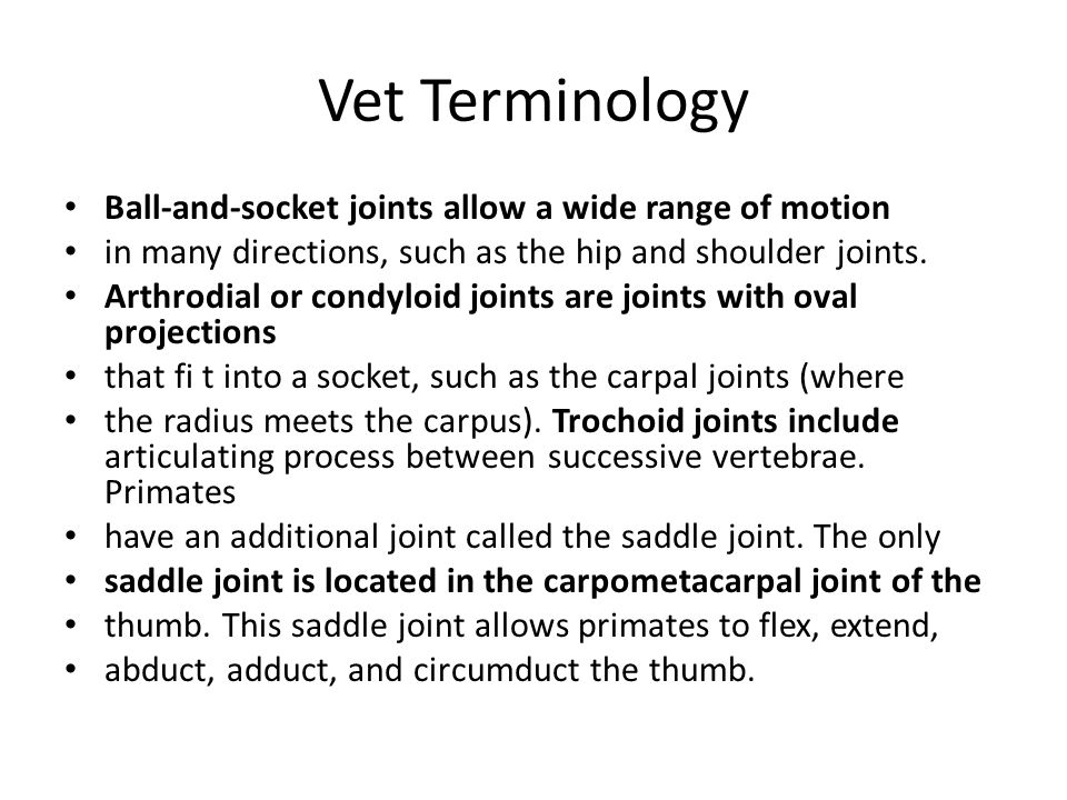 Vet Terminology Ball-and-socket joints allow a wide range of motion