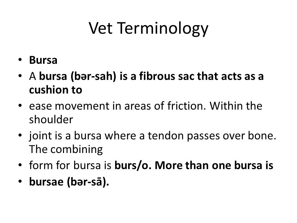 Vet Terminology Bursa. A bursa (bər-sah) is a fibrous sac that acts as a cushion to. ease movement in areas of friction. Within the shoulder.