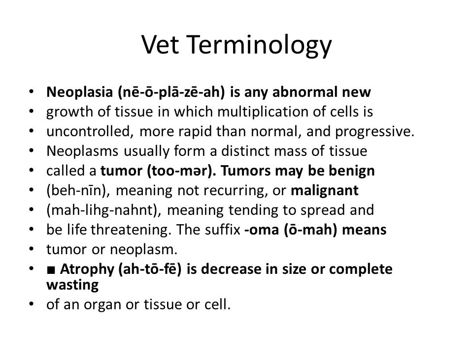 Vet Terminology Neoplasia (nē-ō-plā-zē-ah) is any abnormal new