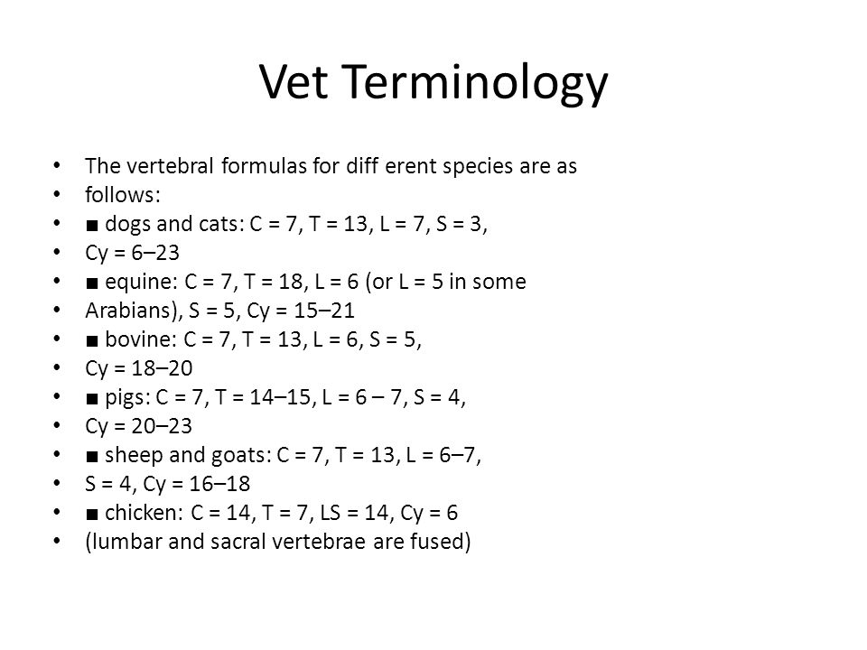 Vet Terminology The vertebral formulas for diff erent species are as
