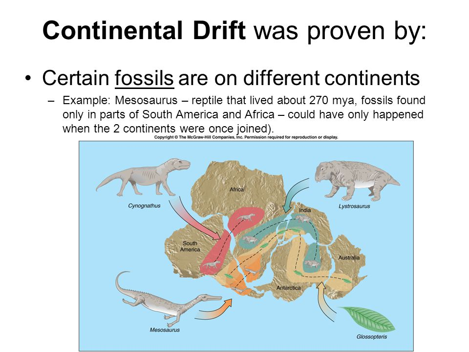 Continental Drift was proven by: