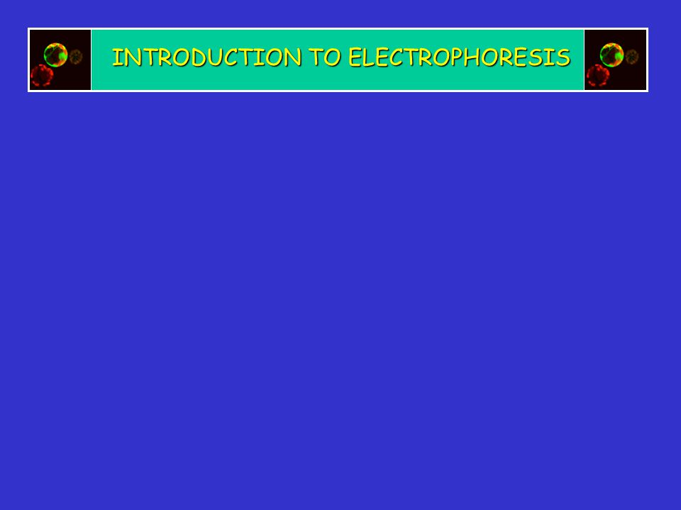 INTRODUCTION TO ELECTROPHORESIS