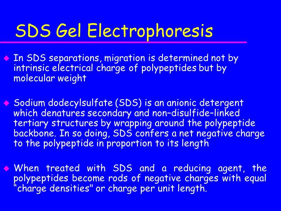 SDS Gel Electrophoresis