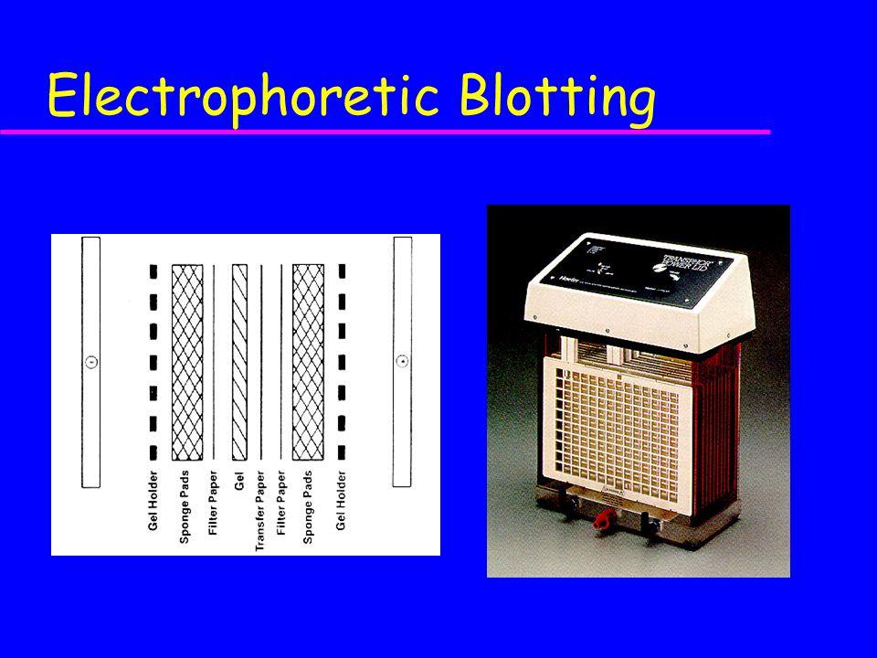 Electrophoretic Blotting