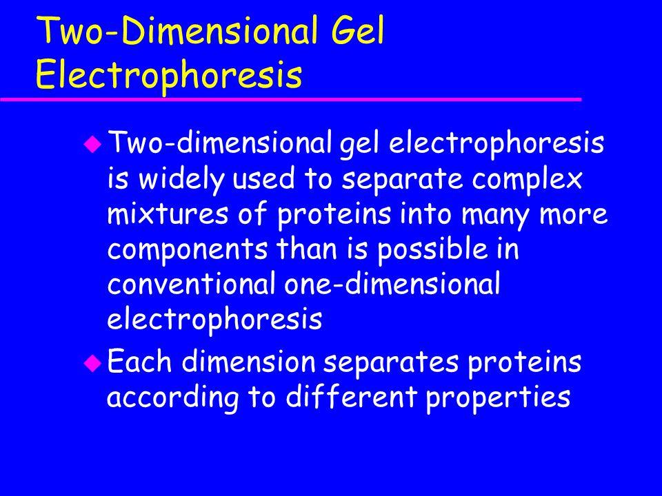 Two-Dimensional Gel Electrophoresis