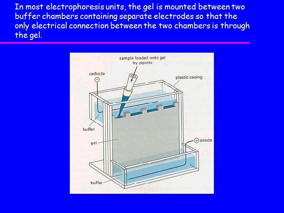 In most electrophoresis units, the gel is mounted between two buffer chambers containing separate electrodes so that the only electrical connection between the two chambers is through the gel.