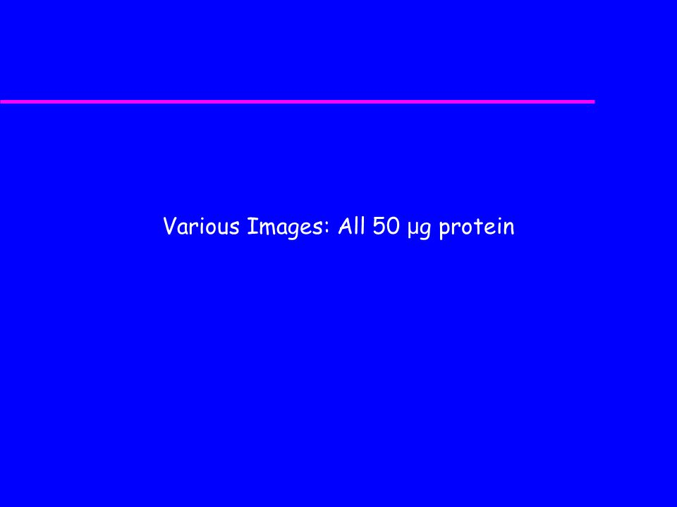 Various Images: All 50 μg protein