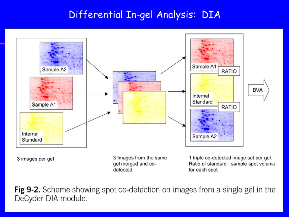 Differential In-gel Analysis: DIA