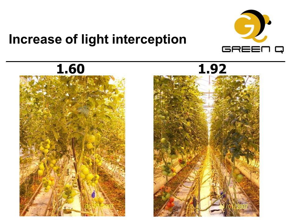 Increase of light interception