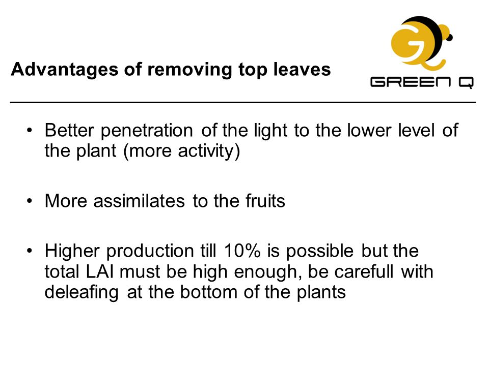 Advantages of removing top leaves