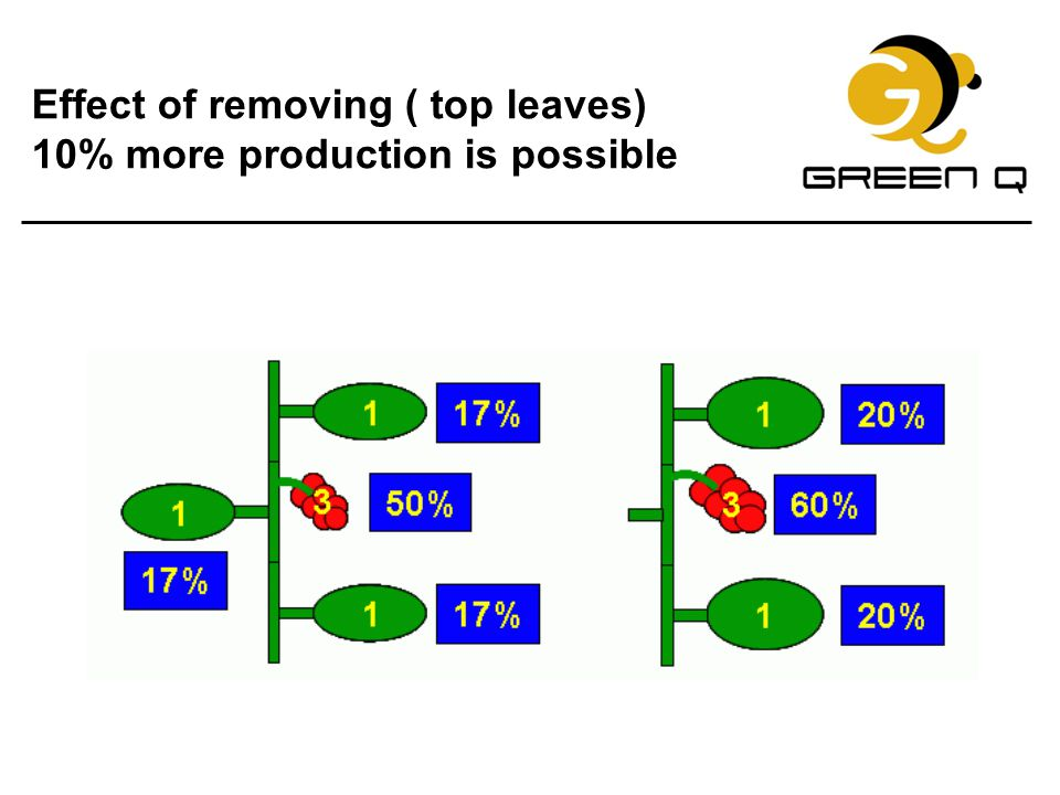 Effect of removing ( top leaves) 10% more production is possible