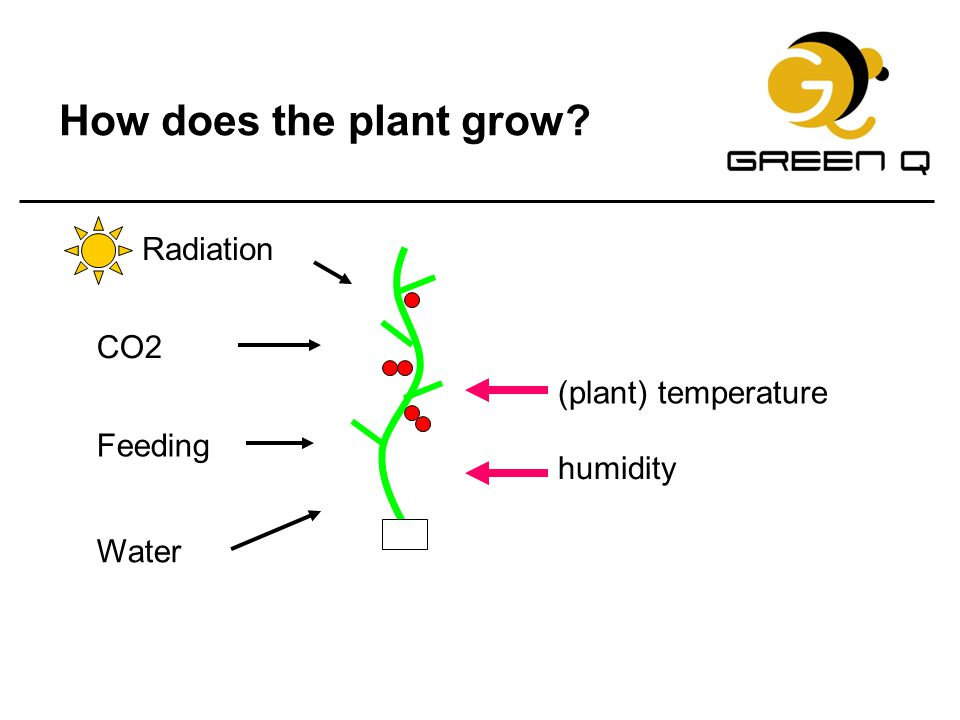How does the plant grow Radiation CO2 (plant) temperature Feeding