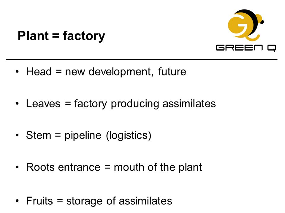 Plant = factory Head = new development, future