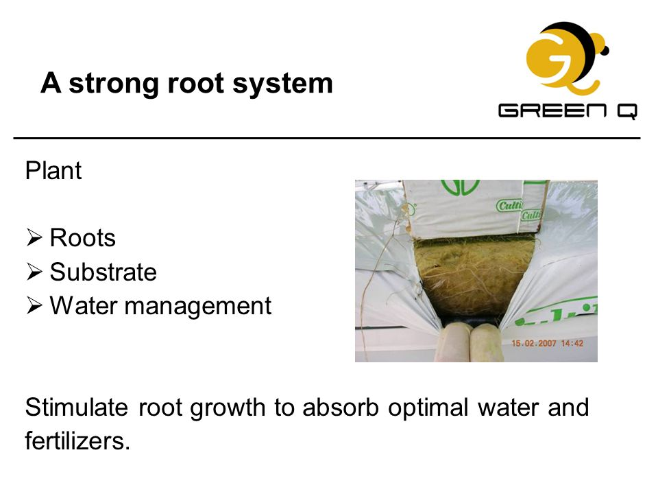 A strong root system Plant Roots Substrate Water management
