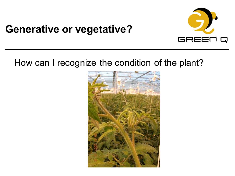 Generative or vegetative
