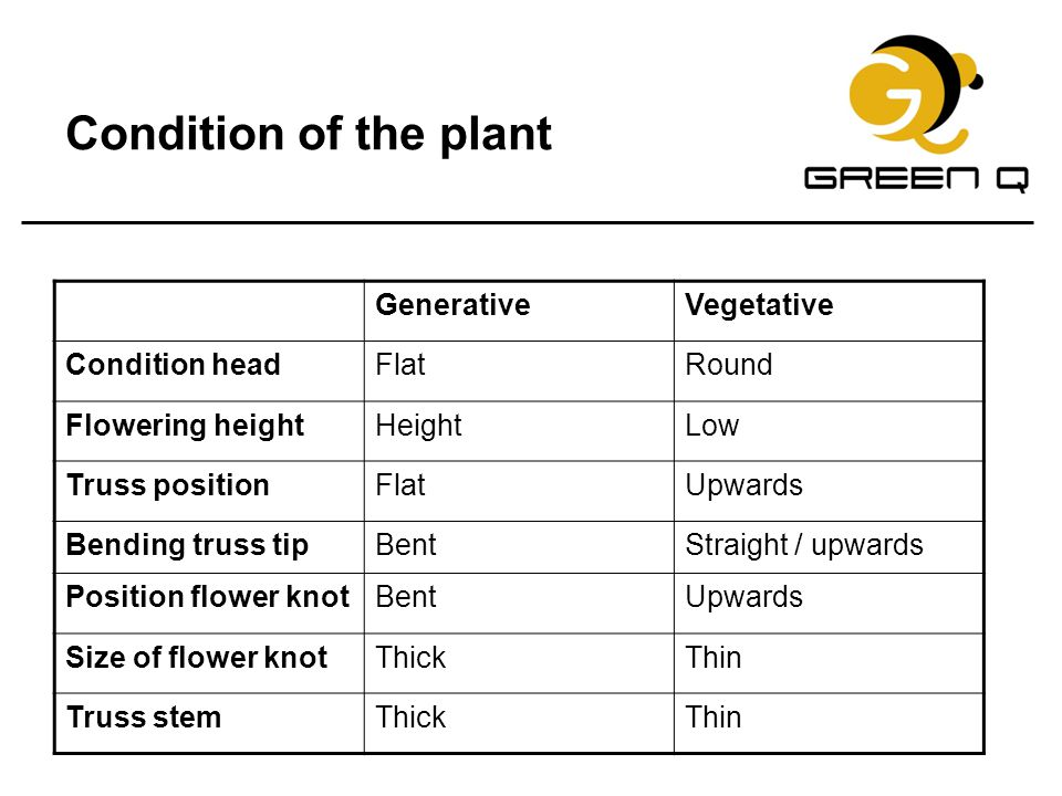 Condition of the plant Generative Vegetative Condition head Flat Round