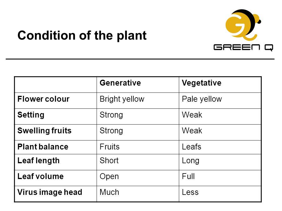Condition of the plant Generative Vegetative Flower colour