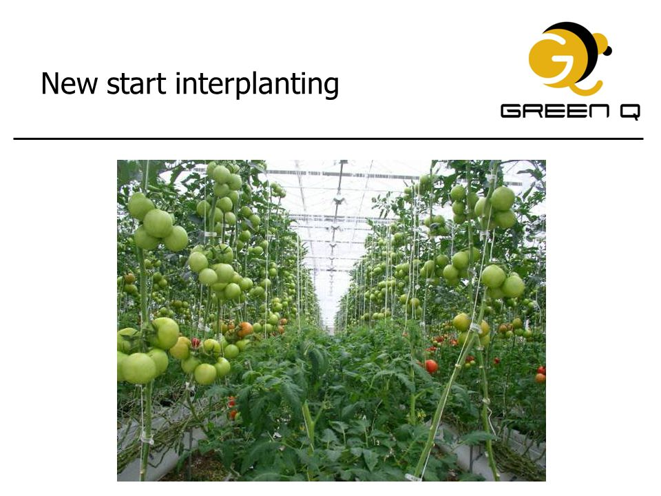 New start interplanting