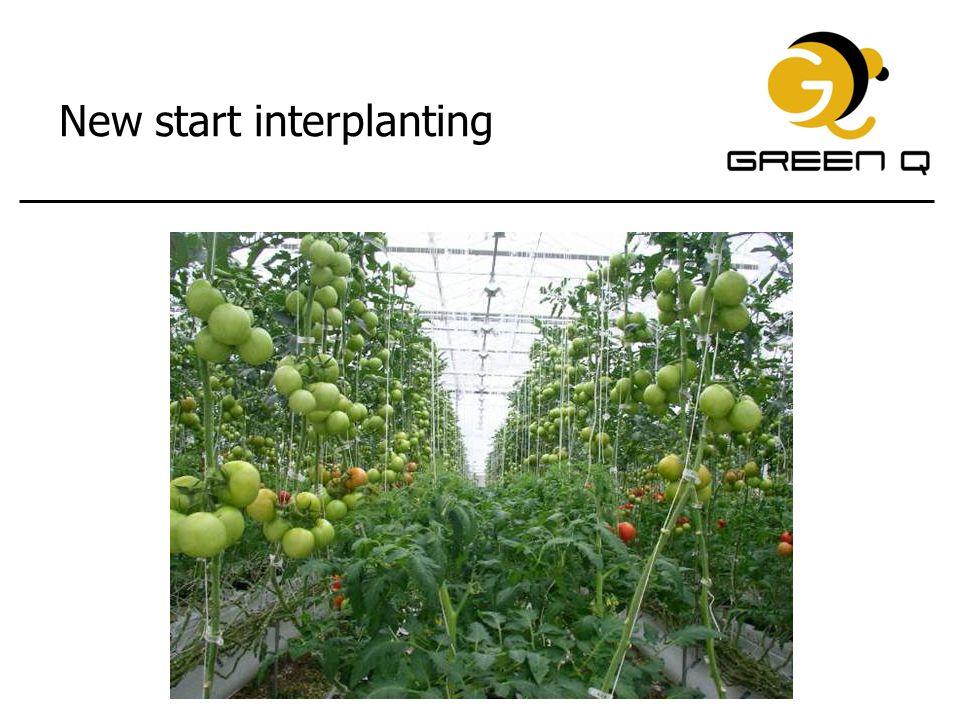 New start interplanting