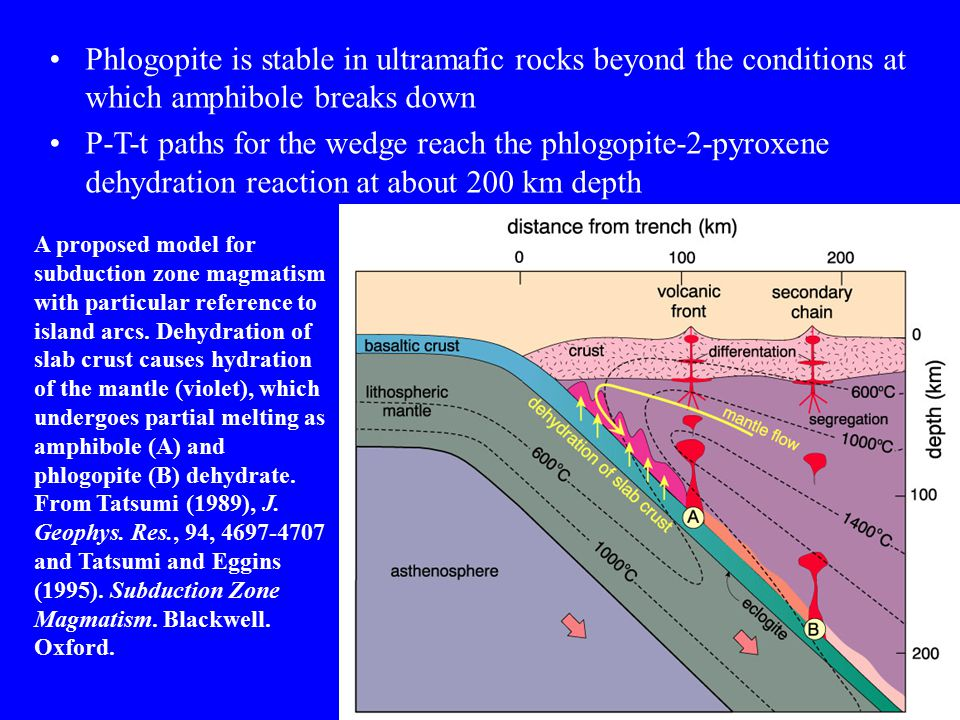 Phlogopite is stable in ultramafic rocks beyond the conditions at which amphibole breaks down