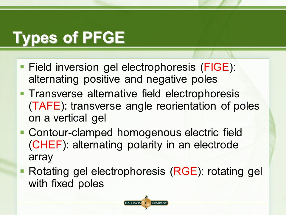 Types of PFGE Field inversion gel electrophoresis (FIGE): alternating positive and negative poles.
