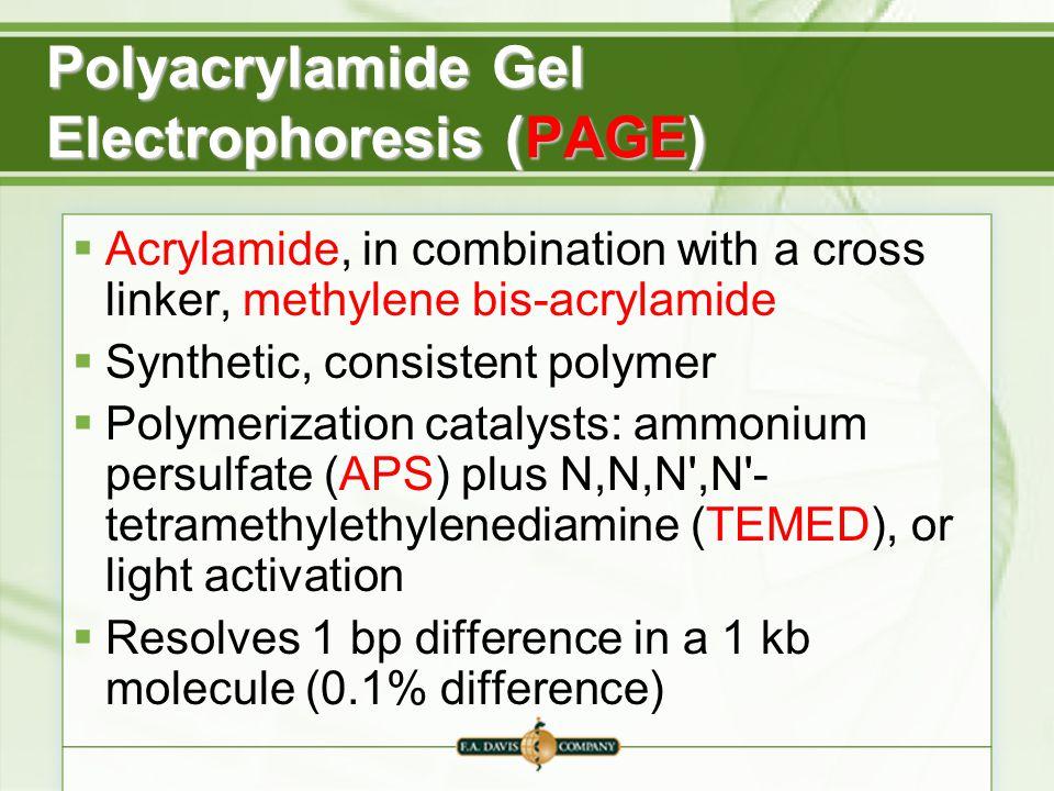 Polyacrylamide Gel Electrophoresis (PAGE)