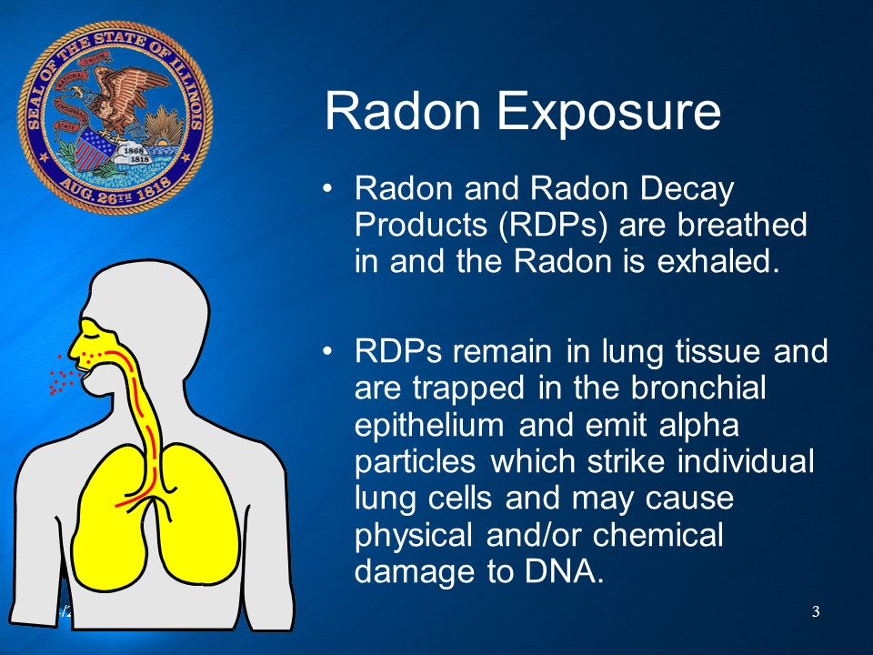 Radon Exposure Radon and Radon Decay Products (RDPs) are breathed in and the Radon is exhaled.