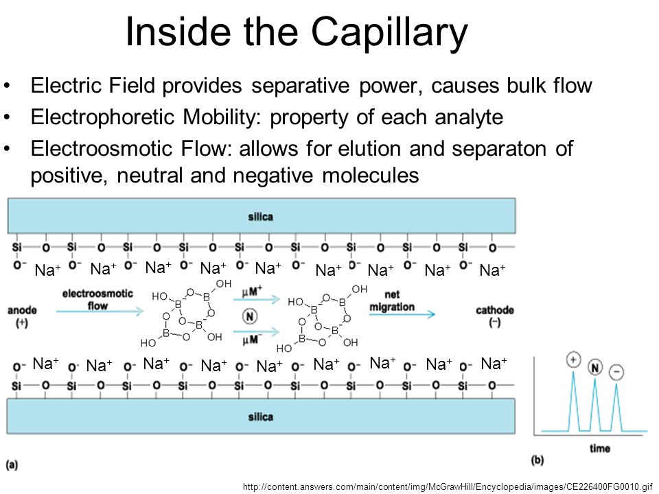 Inside the Capillary Electric Field provides separative power, causes bulk flow. Electrophoretic Mobility: property of each analyte.