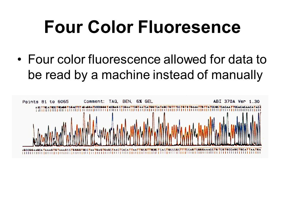 Four Color Fluoresence