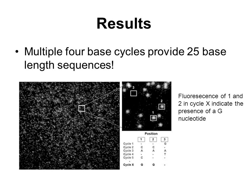 Results Multiple four base cycles provide 25 base length sequences!