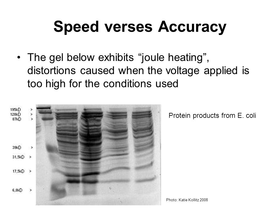 Speed verses Accuracy The gel below exhibits joule heating , distortions caused when the voltage applied is too high for the conditions used.