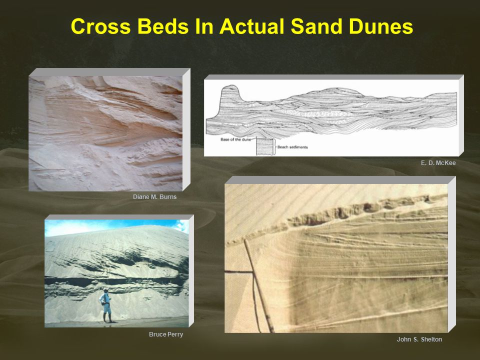 Cross Beds In Actual Sand Dunes