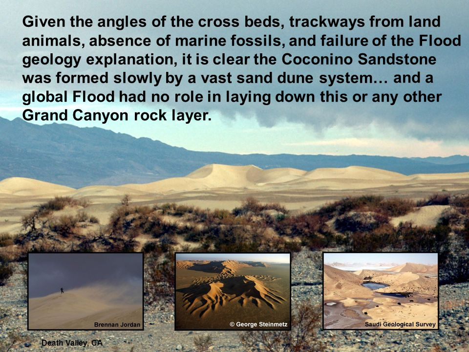 Given the angles of the cross beds, trackways from land animals, absence of marine fossils, and failure of the Flood geology explanation, it is clear the Coconino Sandstone was formed slowly by a vast sand dune system…
