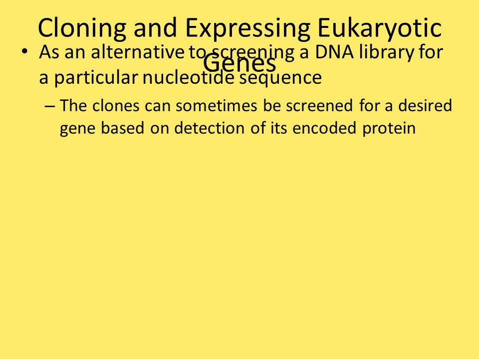 Cloning and Expressing Eukaryotic Genes