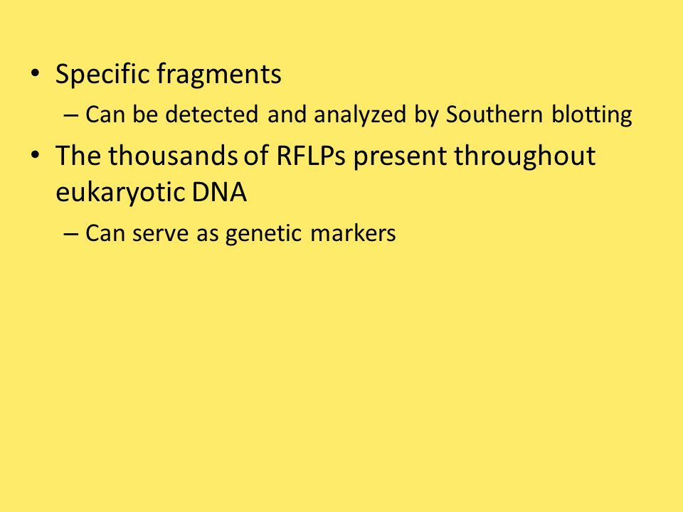 The thousands of RFLPs present throughout eukaryotic DNA