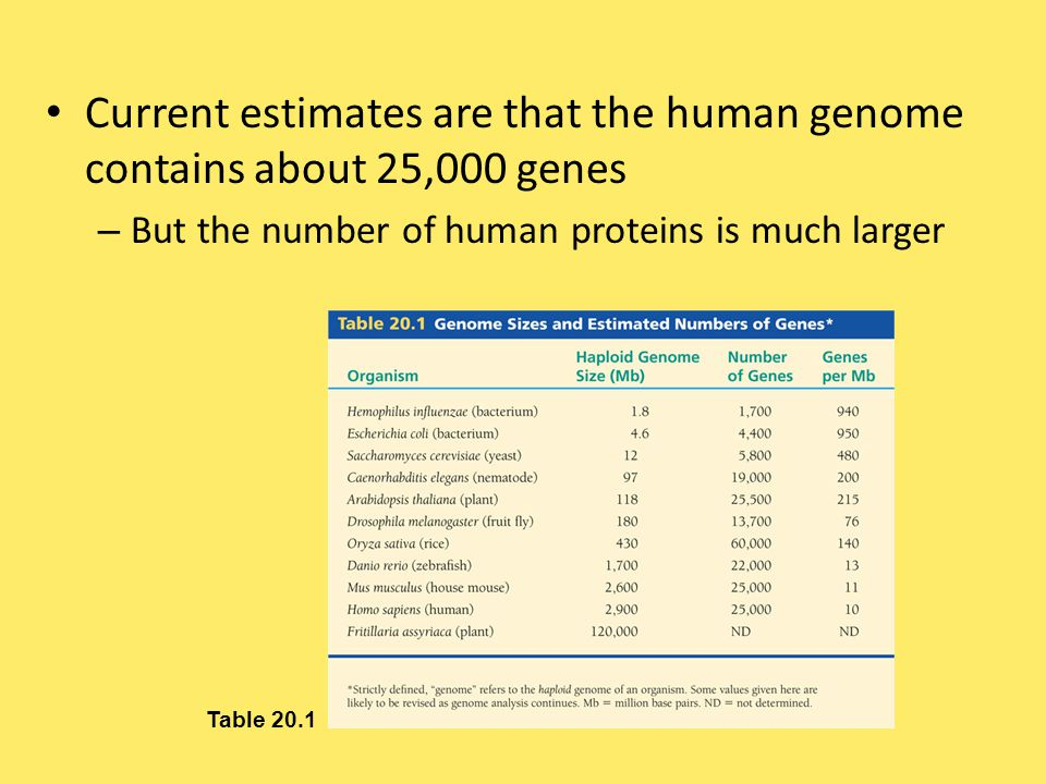 Current estimates are that the human genome contains about 25,000 genes