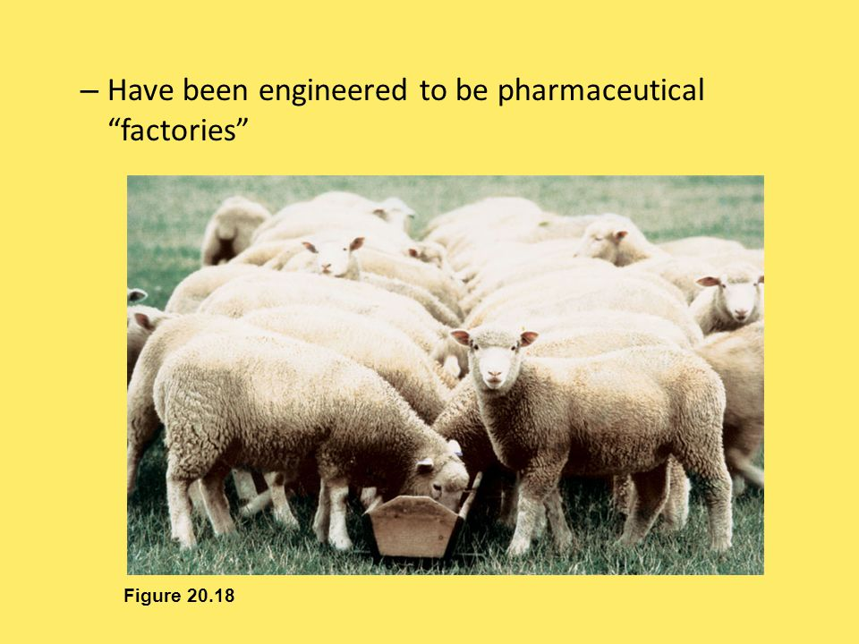 Have been engineered to be pharmaceutical factories
