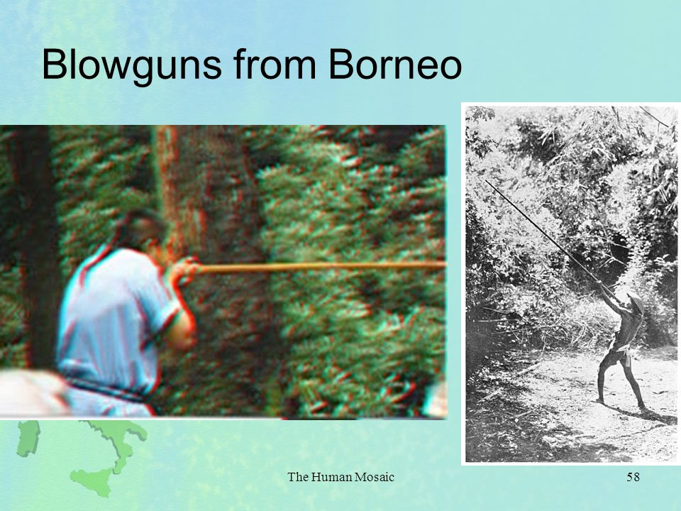 Blowguns from Borneo The Human Mosaic